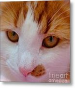 Orange Tabby Kitten Metal Print