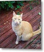 Orange Tabby On Porch Metal Print