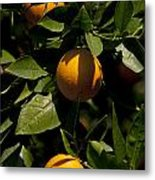 Orange Tree Metal Print
