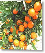 Orange Trees With Fruits On Plantation Metal Print