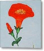 Orange Trumpet Vine Metal Print