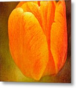 Orange Tulip Brown Texture Metal Print
