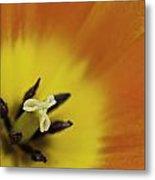 Orange Tulip Macro Metal Print by Lesley Rigg