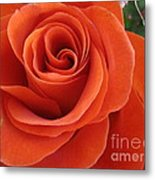 Orange Twist Rose 2 Metal Print