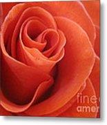 Orange Twist Rose 3 Metal Print