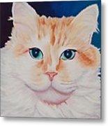 Orange White Cat Portrait Metal Print