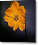 Orange Wild Flower Metal Print