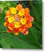 Orange Wildflower Metal Print