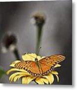 Orange Winged Butterfly Metal Print