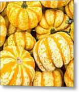 Orange Winter Squash On Display Metal Print