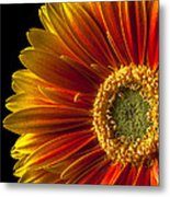 Orange Yellow Mum Close Up Metal Print