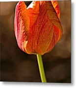 Orange/yellow Tulip Metal Print