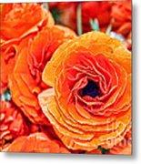 Orange You Happy Ranunculus Flowers By Diana Sainz Metal Print