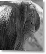 Orangutan Black And White Metal Print