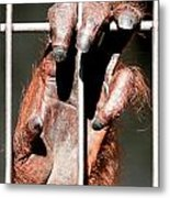 Orangutan Hand Close-up Metal Print