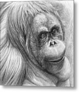 Orangutan - Pongo Pygmaeus Metal Print