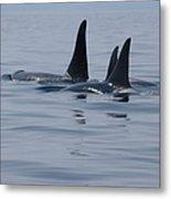 Orca Family Metal Print