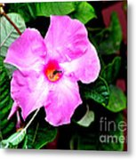 Orchard Colored Mandevilla Metal Print