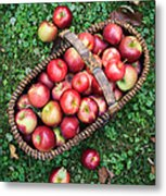 Orchard Fresh Picked Apples Metal Print