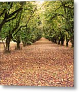 Orchard In The Morning Metal Print