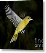 Orchard Oriole Hen Metal Print
