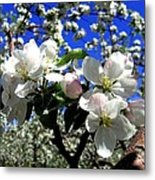 Orchard Ovation Metal Print