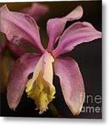 Orchid 133 Metal Print
