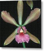 Orchid 15 Metal Print