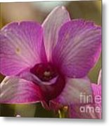 Orchid 152 Metal Print