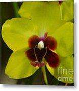 Orchid 153 Metal Print