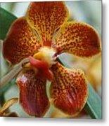 Orchid 195 Metal Print