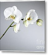 Orchid 1a Metal Print