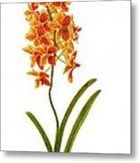 Orchid 2 Metal Print