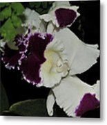 orchid 220 Cattleya Moscombe 'The King'  2 of 3 Metal Print