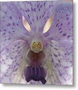 Orchid 76 Metal Print