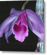 Orchid 9 Metal Print