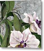 Orchid A - Phalaenopsis Metal Print