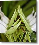 Orchid Arms Metal Print