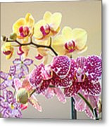 Orchid Art Prints Orchids Flowers Floral Bouquets Metal Print