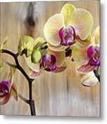 Orchid Beauties Metal Print