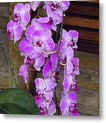 Orchid Beauties Metal Print