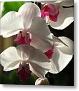 Orchid Beauty Metal Print