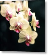 Orchid Blossom Metal Print