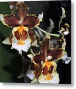 Orchid Brown Yellow White Macro Metal Print