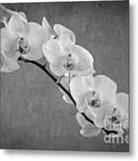Orchid Bw Metal Print by Hannes Cmarits