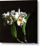 Orchid Cattleya Bow Bells Metal Print by Charline Xia