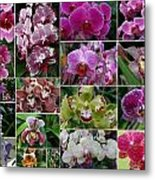 Orchid Collage 1 Metal Print