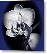 Orchid Elegance 2 Metal Print