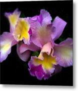 Orchid Embrace Metal Print