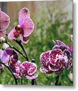 Orchid Field Metal Print by Paula Rountree Bischoff